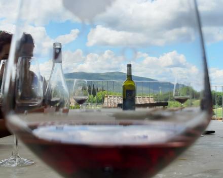 Wijnhuizen in Toscane