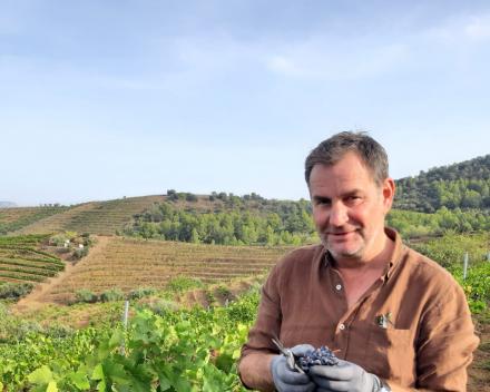 Pluk druiven | Spanje